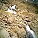 al ritorno l'inizio della cascata che fuoriesce dal piano dell'alpe Piei e laghetti Port