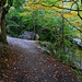 Oberhalb von Πριόνια (Priónia) führt der Hüttenweg zuerst durch ein tiefes Tal mit schönem Laubwald.