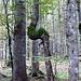 Spezielle Bäume haben die da in Slowenien!