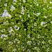 Das Grün ist von vielen Wassertropfen besetzt