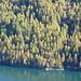 der Herbstwald südlich vom Lago Ritóm