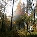 Herbstwald am Immenstädter Horn