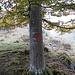 Diese Markierungen an Bäumen und Felsen trifft man auf dem Weg vom Obersee zum Furggeli immer wieder an.