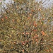 Ein paar hundert Meter vom Ohlyturm entfernt gibt es Obstbaumwiesen und...