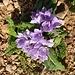 Blumenstudie