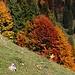 Herbstfarben.