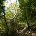 Aufstieg auf Serpentinen durch Kastanienwälder.