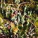 interessante Moose und Flechten in den Hochmooren des Sonnenkopf