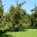 Das warme Klima des Südburgenlandes eignet sich ideal zum Obstanbau.