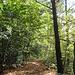 Es herbstelt - Waldpfad auf dem Geigenberg Richtung Süßenmühle mit immer wieder schönen Ausblicken zum See