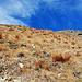 Steiles Gras im Abstieg zur Falkomaialm