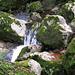 Steine, Moos und Wasser