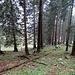 mystischer Wald in der Querung zum sanften Rücken des Kamor