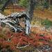 Herbst auch am Boden des Kiefernwaldes