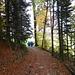 durch herbstlichen Wald zum Muserholz hinaus ...