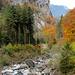Herbstszenerie in der Aabachschlucht.