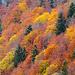 Leuchtende Herbstfarben.