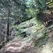Questa è per UpTheHill, a cui piace camminare nei boschi