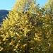 der Herbst hat auch Piotta in der Leventina erreicht