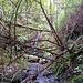 <br /><b>Unterwegs im Wald nach Teid</b>