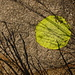 Sun-Set: Sumi-e aus Gräserschatten und Leuchtfarbe auf Gneis nahe der Pianca Bella