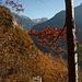 Herbstlich gerahmte Aussicht von Gramiröi zum P. di Strega über dem Val Pontirone