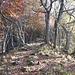 <b>Dai 1100 m di quota, raggiunta la dorsale che separa la Valle del Lembro dalla Valle della Croce, il sentiero spiana; entro nella zona denominata Pianche. </b>