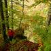 Herbst in der Westwand