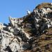 Gipfelhund Walachamm