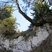 über dem Wändchen quert man in das steile Waldstück