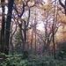 Im Nebel hat der Wald etwas Magisches an sich
