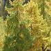 Schöne Herbstfarben am Stilfser Joch