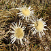 """Drei Disteln, die einzigen """"Blumen"""" die wir noch antrafen."""