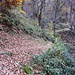 Ich erreiche den Wald, hier ist die Pfadspur noch deutlich zu sehen