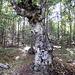 Oben auf dem Plateau des Slowakischen Paradies angekommen.