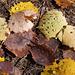Herbstperlen 1