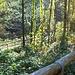 Bosco fresco e percorso ben tenuto