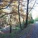 .....Sentiero Naturalistico a fianco dell'onnipresente Margorabbia.