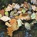foglie sospese...