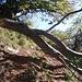 Il ramo spezzato di un albero ci sbarra la strada, capita! Non essendo Hercules o l'incredibile Hulk è forse meglio che ci giri intorno.