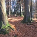 nahe P. 1001 Beginn der wunderschönen, vom Herbstlaub geprägten ...
