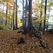 ... und durch den herbstlichen Wald auf ebenso malerischer Unterlage ...