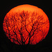 Vernetzt / collegato<br /><br />Das erste Mal seit langem wieder mal die sichtbare Sonne bei Sonnenuntergang und kein Dauernebel. / Per la prima volta da molto tempo oggi si vedeva il sole al tramonto e non solo la nebbia fissa in pianura.