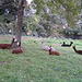 Gruppo di lama