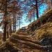 Verso l'Alpe di Mezzo