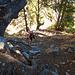 Steil führt der Pfad den Wald hinauf.