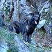 Der Wolf in seinem natürlichen Habitat. ;-)