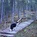 Feuchter Weg im Wald, aber mit vielen Holzstegen