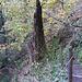 Waldweg oberhalb der Leitern