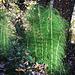 Sieht ein bisschen aus wie Bambus